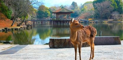 Get close to deer at Nara Park