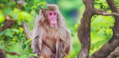 Meet Snow Monkeys at Arashiyama Monkey Park