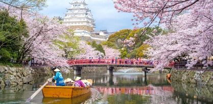 See Japan's famous Cherry Blossoms