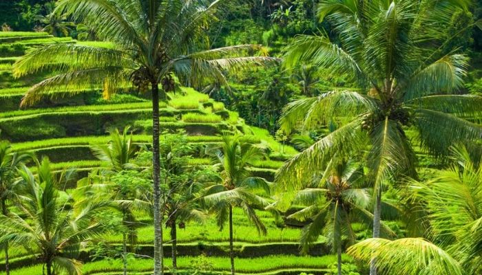 Bali forest, Indonesia