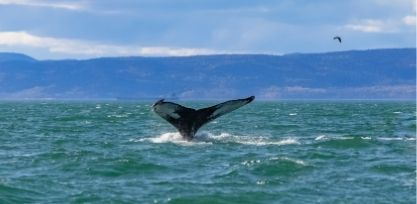 Enjoy Whale Watching