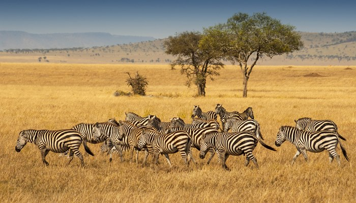 Best time of year to do a safari