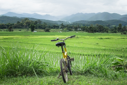 Cycling in the countryside, Hoi An