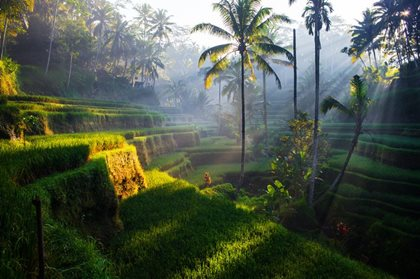 Tegallalang Rice terraces at sunrise