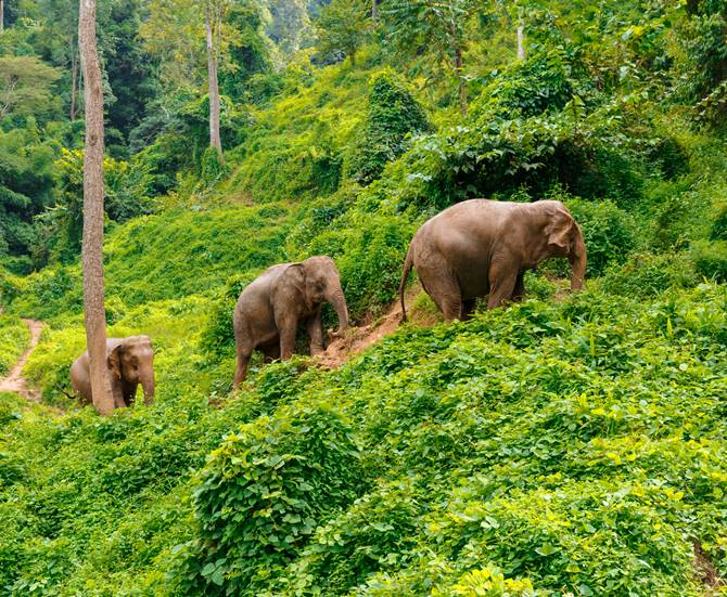 the jungle in Chiang Mai Thailand