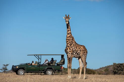 Safari Plains Game Drive