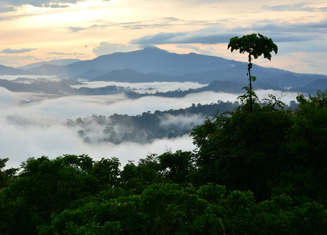 sunrise scenery in Danum Valley, Sabah Borneo