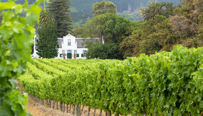 Cape Dutch Wine Estate