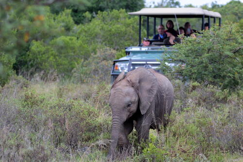 Credit Hlosi Game Lodge - Game Drive