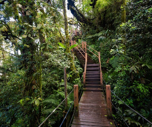 Mossy Forest, Cameron Highlands, Malaysia