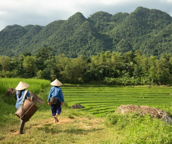Villagers hike to rice fields, Pu Luong, Vietnam